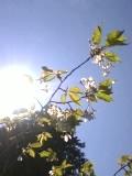 箱根にも春