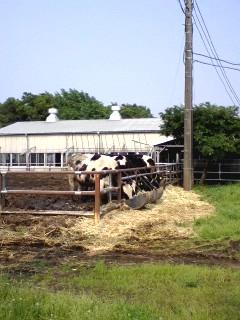 牛さん、うしさん。